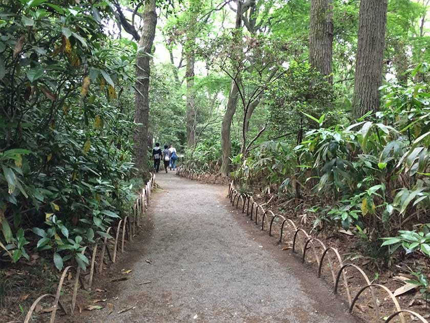 Meiji Shrine (Meiji Jingu) - Garden Path