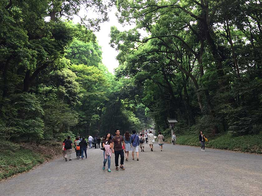 Meiji Shrine (Meiji Jingu) - Road to Shrine