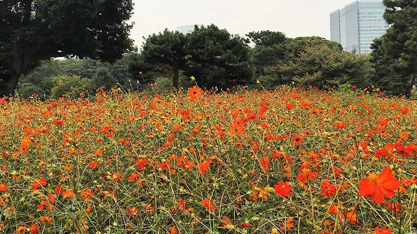 Hama Rikyu Gardens - Flower Gardens