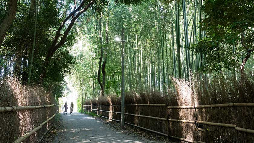 Arashiyama Bamboo Grove Path is wheelchair Accessible
