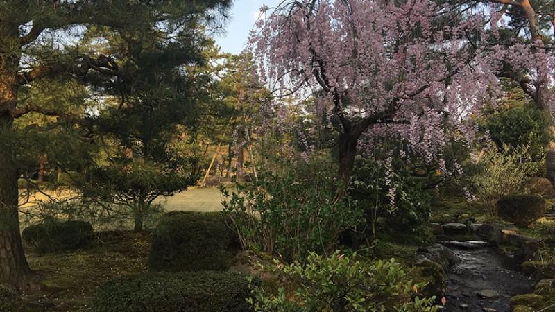 kenrokuen-trees