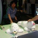 Paro Seal Robot