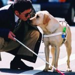 Scene from Quill: The Life of a Guide Dog
