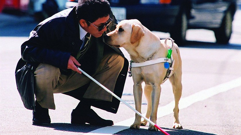 Quill: The Life of a Guide Dog – Movie Review
