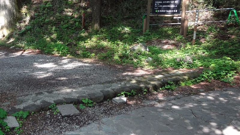 hakone-round-course-8-cedar