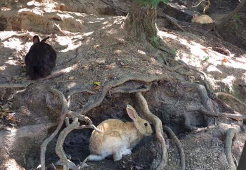 Resting bunnies