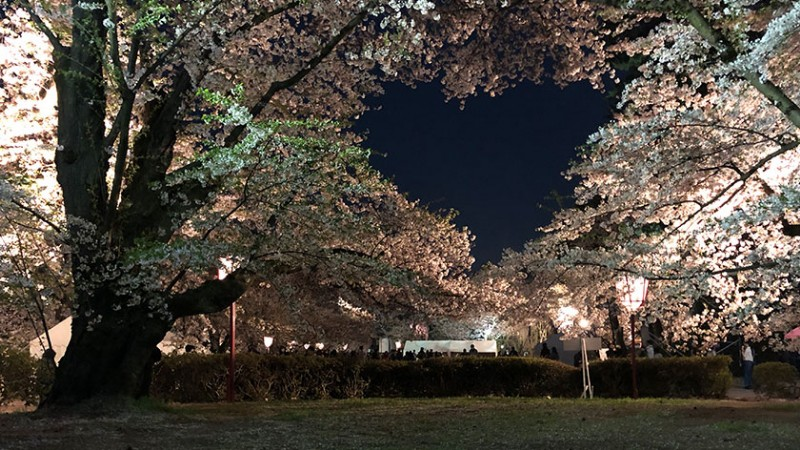 hirosaki-castle-heart-trees