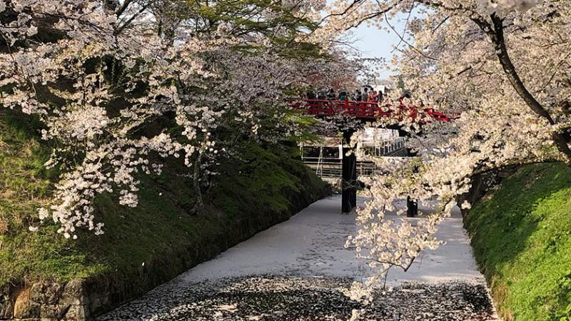 hirosaki-castle-sakura-moat