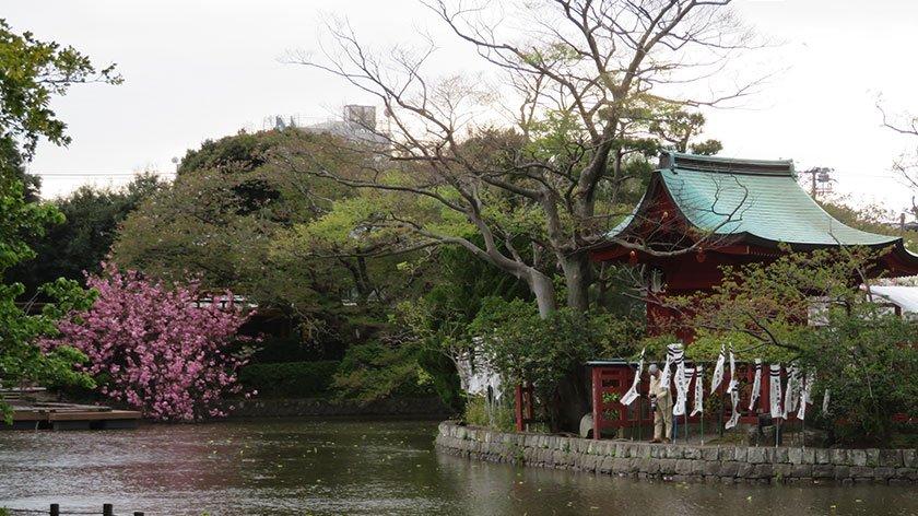 Pond at Tsurugaoka Hachimangu