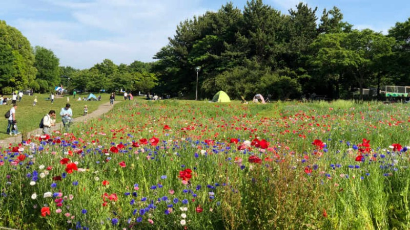 kasai-rinkai-park-flowers