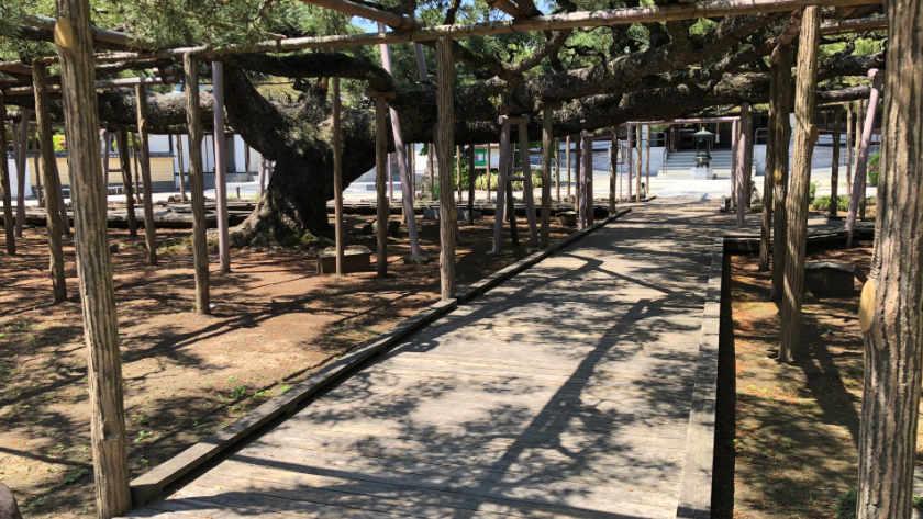 Zenyoji Temple Yogo no Matsu path