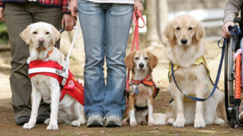 Bringing a Guide Dog or Service Dog to Japan