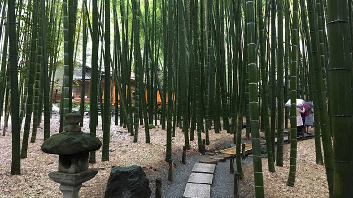 Bamboo forest at Hokokuji