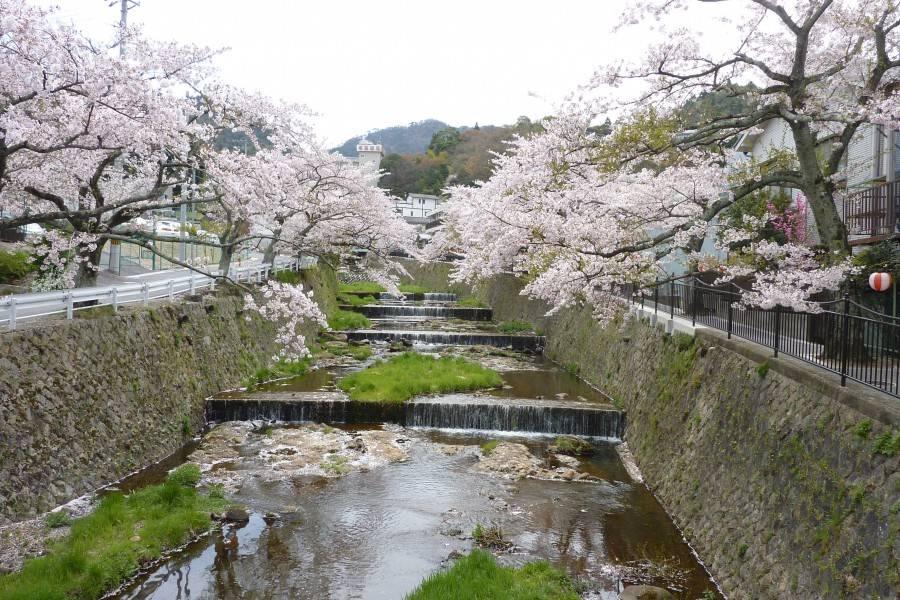 30桜の小路-900x600